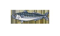鯖 Mackerel Caranx ignobilis