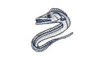 太刀魚 Largehead hairtail