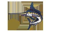 黒梶木 Indo-Pacific blue marlin