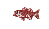 赤鯥 Rosy seabass