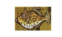 皮剥 Thread-sail filefish
