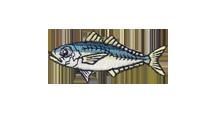 鰺 Jack mackerel