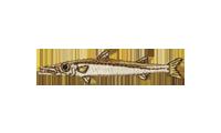 魳 Barracudas