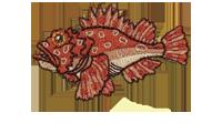 鬼瘡魚 Scorpaenopsis cirrosa