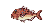 真鯛 Red seabream