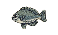 眼仁奈 Largescale Blackfish