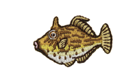 皮剥 Thread-sail filefish