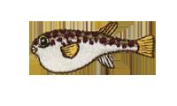 潮際河豚 Globefish