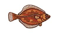鰈 Righteye flounder