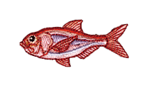 金目鯛 Beryx splendens