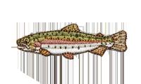 虹鱒 Rainbow trout